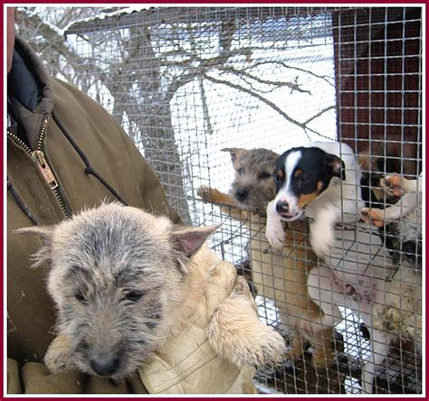 puppy mills in wisconsin puppy mills