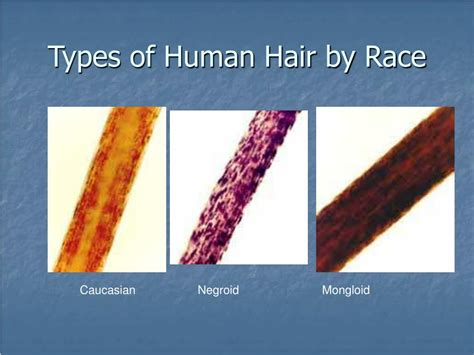 Types Of Human Hair by Ppt Forensic Hair Analysis Powerpoint Presentation Id