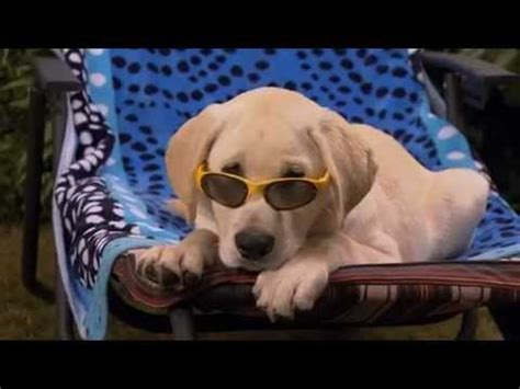 marley and me puppy years marley and me the puppy years official trailer