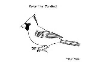 cardinal coloring page cardinal coloring page