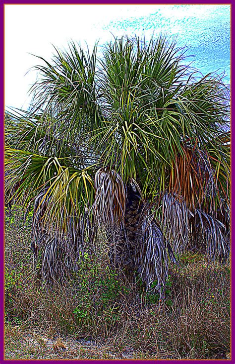 Palm Gardens Of Largo by Palm Tree In The Botanical Gardens Of Largo Florida By