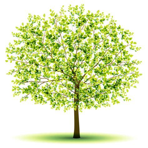designer trees creative green tree design vector graphics 03 welovesolo
