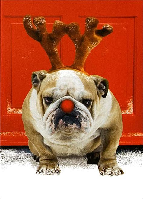 christmas bulldog home christmas cards animals dogs red nosed bulldog doggies