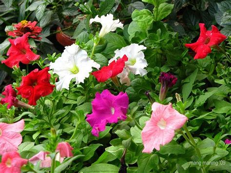 non flowering shrubs 1000 images about non flowering outdoor plants on