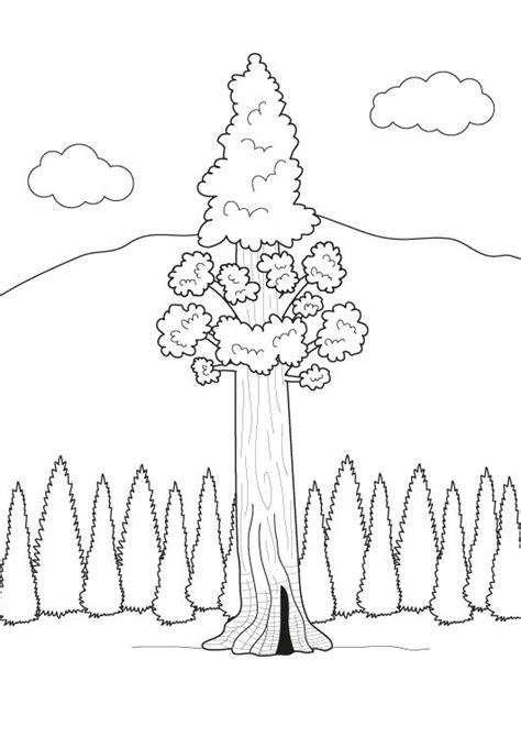 Imprimir: El árbol más alto del mundo: dibujo para