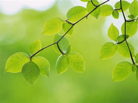 wallpaper of green leaves green leaves green wallpaper 22176071 fanpop