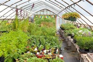 hill house plants plant nursery