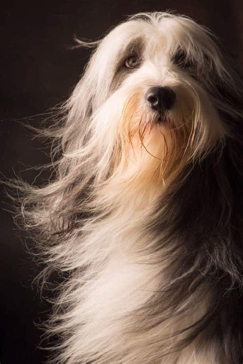 why do dogs hump their bed shangralafamilyfun com shangrala s dogs with beautiful