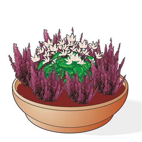 fioriere invernali eriche e callune per le fioriere invernali cose di casa