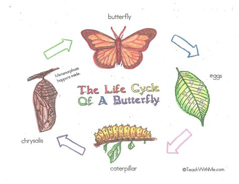 emotional butterfly the metamorphosis and the lessons learned books developmental stages of a butterfly pictures to pin on