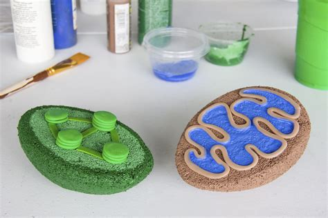 How To Build A 3d Model For Cell Biology Projects