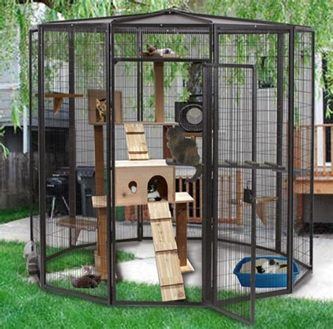 Kandang Kucing Paralon kandang kucing untuk outdoor all about ku cat