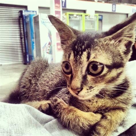 Manja World Dosen Kucing nak comel tapi berbisa amirnawawi