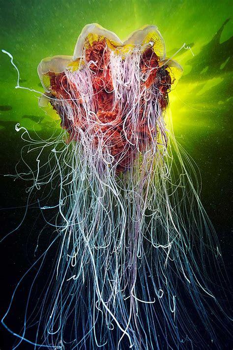 imagenes upsocl viaja al fondo del mar con estas maravillosas im 225 genes