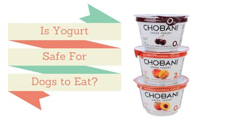 yogurt for dogs can dogs eat yogurt is it for them smart owners