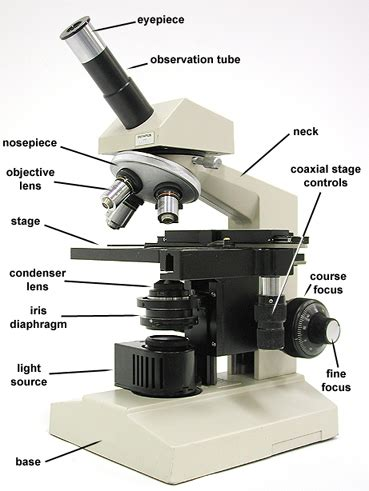 what part of the microscope regulates the amount of light compound light microscope parts microscope heroes