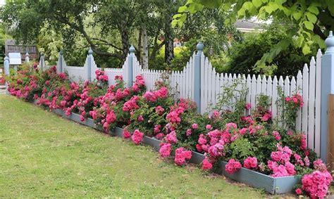 long border  flower carpet pink roses presents nicely