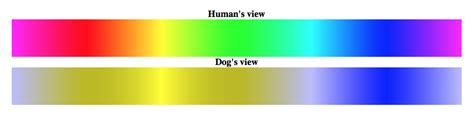 are dogs color blind american kennel club
