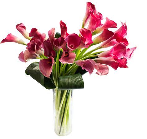 Vase Of Lilies Deluxe Calla Lilies In Vase