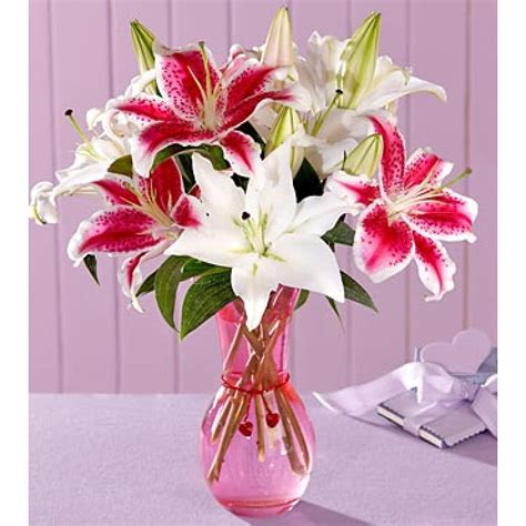 Lilies In Vase by 10 Pink And White Lilies In A Glass Vase Myflowergift