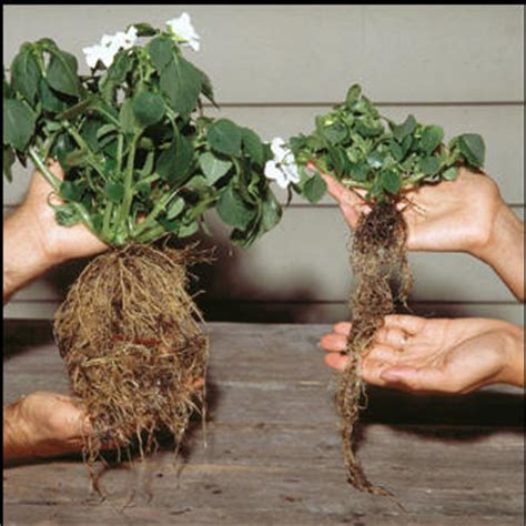 grow your own hrt sprout hormone rich greens in only two minutes a day books rootblast helps plants grow bigger faster and produce more