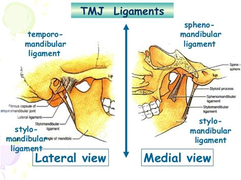 tmj diagram tmj anatomy diagram tmj concepts elsavadorla