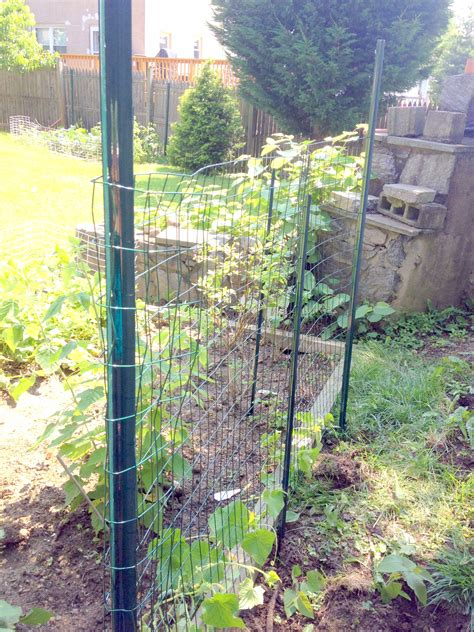 simple garden trellis diy easy garden trellis for squash and cucumbers