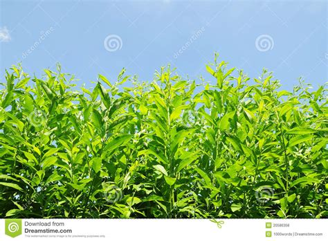 green foliage outdoor plants green garden plants royalty free stock photos image