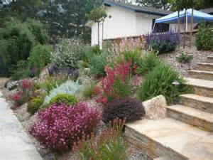 drought resistant plants southern california deer resistant and drought tolerant plants about