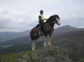 Heavy horses heavy horse riding experience clydesdale horse riding