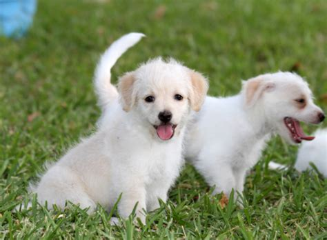 petfinder puppy petfinder dogs by breeds breeds picture