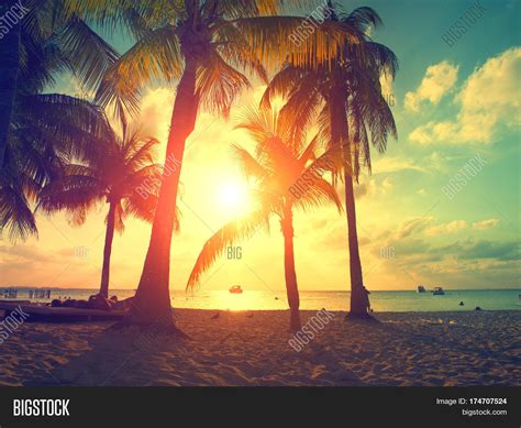 overdue in paradise the library history of palm county books sunset palm trees beautiful image photo bigstock