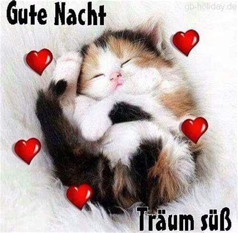 Gute Nacht Katzen Bilder by Gute Nacht Tr 228 Um S 252 Ss Katzen Bilder Gute
