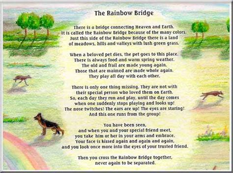 rainbow bridge poem for dogs leerburg rainbow bridge