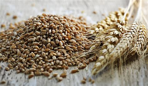 whole grains vs wheat the about whole grain vs whole wheat