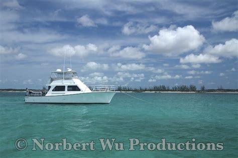 epic dive boats m v thresher custom shark diving boat epic diving