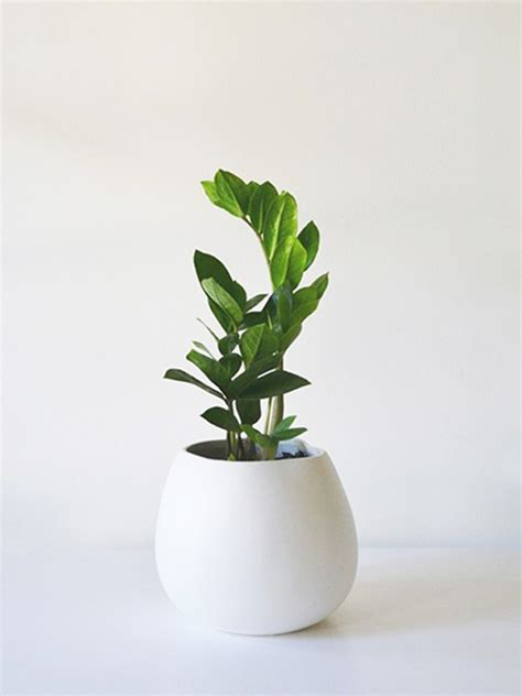 small plant small plant small pot green grow container favorite