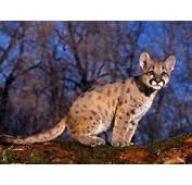 Download Wallpapers Free Wild Animals Wallpaper
