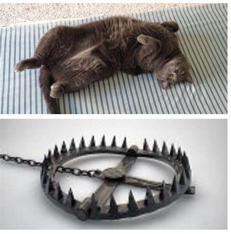 Cat Trap Meme - it s a trap beheading boredom