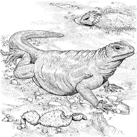 coloring pages komodo dragon reptile coloring pages by yuckles