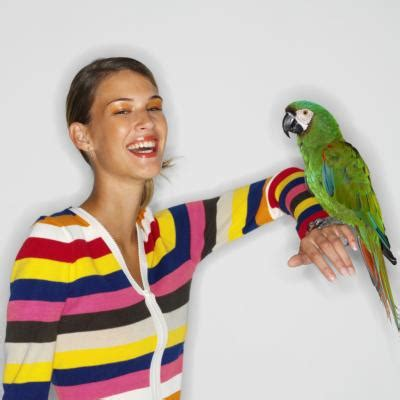 Polly George Does Birds by How To Build A Playpen For A Parrot Animals Me