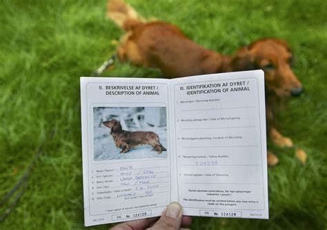 puppy passport traveling with pets overseas a guide to some