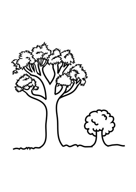 pecan tree coloring pages