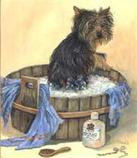 leave in conditioner for yorkies puppy grooming