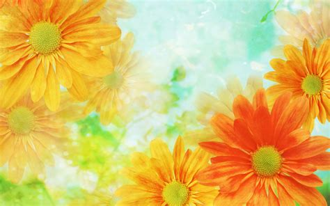wallpapers for desktop background flowers awesome yellow flower wallpaper desktop wallpaper