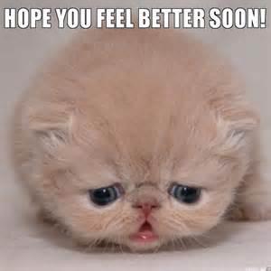 gallery for gt feel better cat meme