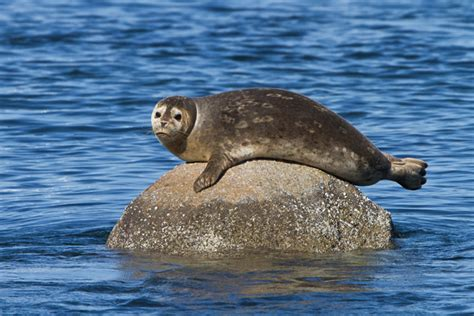 party boat fishing charters in ct harbor seal cruises