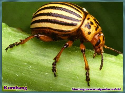 daftar nama  gambar serangga nama gambar binatang