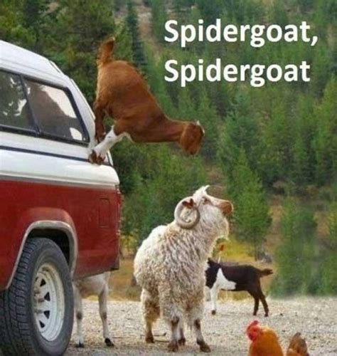 Funny Goat Memes - 30 funny animal captions part 10 30 pics amazing