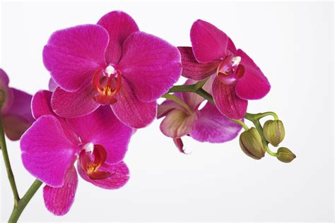 How To Frame A Print by Orchidee White Background Wall Mural Amp Photo Wallpaper